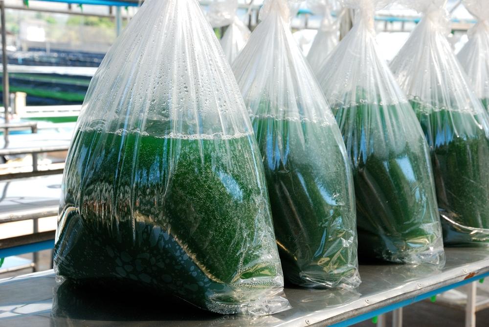 sac algues