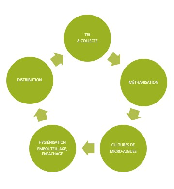 schema green